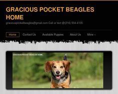 Gracious Pocket Beagles
